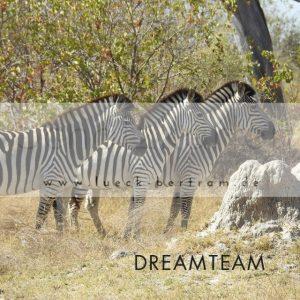 set1-schatzkarten-lueck-bertram-dreamteam-p-wz-640px